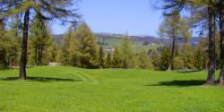 Bergwiesen des Möltner Jochs
